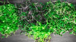 органические ростки зеленого цвета смешивания Стоковые Изображения RF