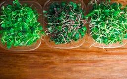 органические ростки зеленого цвета смешивания Стоковые Фотографии RF