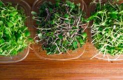 органические ростки зеленого цвета смешивания Стоковое Фото