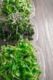 органические ростки зеленого цвета смешивания Стоковые Фото