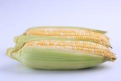 Органические свежие corns изолированные на белой предпосылке Стоковое Фото
