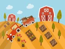 Органические сельскохозяйственные продукты, взгляд ландшафта Стоковое фото RF