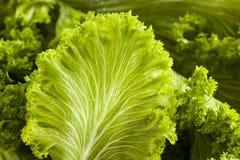 Органические сырцовые зеленые цвета мустарда стоковое фото rf