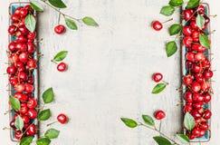 Органические сладостные вишни с листьями, сбором от сада на белой деревенской деревянной предпосылке, взгляд сверху Стоковое фото RF
