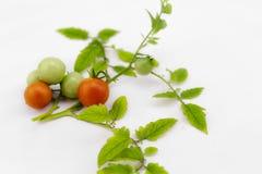 Органические томаты вишни на стержне на изолированной предпосылке Стоковые Изображения RF