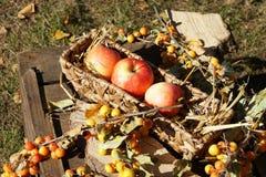 Органические яблоки в натюрморте осени корзины тематическом стоковые изображения rf