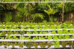 Органические hydroponic овощи в саде Стоковые Фотографии RF