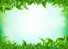 Органические leavess чая бесплатная иллюстрация