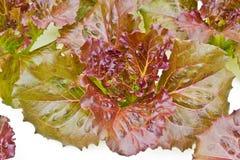 Органические vegetable фермы для предпосылки. Стоковое Изображение