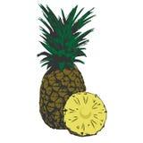 Органический ананас тропический иллюстрация вектора