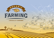 Органический ландшафт сельского хозяйства Стоковая Фотография