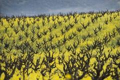 Органический виноградник виноградины, винная страна Калифорнии стоковое фото rf