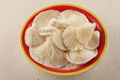 Органический гриб устрицы в шаре Стоковые Изображения RF