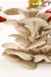 Органический гриб стоковое фото rf