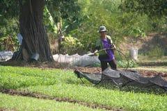 Органический, земледелие, ферма, рис, тайские фермеры, alatus Dipterocarpus Стоковое Фото