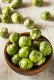 Органический зеленый brussel - ростки Стоковое Изображение
