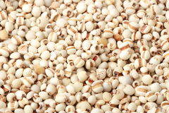 Органический коричневый рис Стоковые Изображения