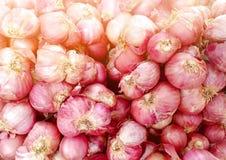 Органический красный лук в местном рынке стоковые изображения