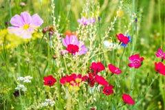 Органический луг цветка, консервация для насекомых с естественной средой обитания стоковые фото