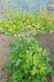 Органический овощ Стоковая Фотография