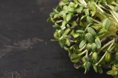 Органический растя micro зеленеет крупный план Стоковое фото RF