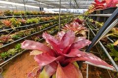 Органический сад сельского хозяйства цветка Стоковое Изображение RF