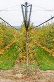 Органический сад Apple Стоковое Фото
