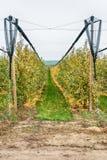Органический сад Apple Стоковые Фото
