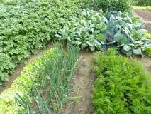 Органический сад Стоковая Фотография