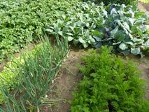 Органический сад Стоковое фото RF