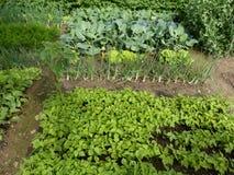 Органический сад Стоковые Изображения RF