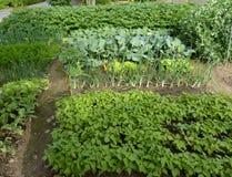 Органический сад Стоковые Фото