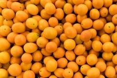 Органический свежий апельсин кумквата Стоковая Фотография