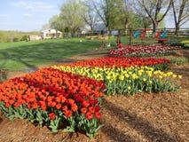 Органический фестиваль тюльпана в Вирджинии Стоковое фото RF