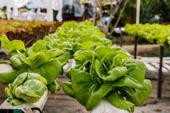 Органический hydroponic сад вертикали овощей Стоковое Фото