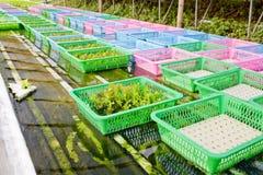 Органический vegetable росток Стоковое Изображение RF