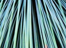 Органическое абстрактное Beargrass Стоковое Изображение RF