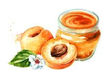 Органическое варенье плодоовощ Стеклянный опарник мармелада абрикоса и свежих фруктов изолированных на белой предпосылке Нарисова стоковые фотографии rf