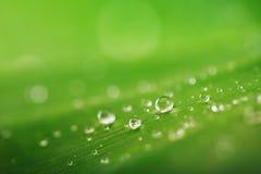 Органическое зачатие, свежие зеленой падения травы, лист и воды подпирают Стоковое Изображение RF