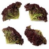 Органическое красное собрание салата лист Стоковое Изображение RF
