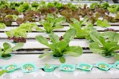 Органическое hydroponic merket Таиланда огорода Стоковое Изображение RF