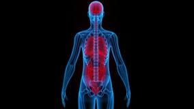 Органы человеческого тела (мозг, легкие, большой и тонкая кишка с почками) иллюстрация штока