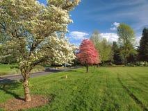Орегон паркует весеннее время pnw Стоковое Изображение