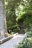 Орегон, St Хелен держателя Стоковая Фотография RF