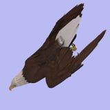 орел большой Стоковые Изображения RF