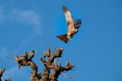 Орел в действии стоковое изображение