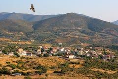 орел над селом Стоковое Изображение RF