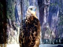 Орел садить на насест на ветви дерева Стоковые Изображения RF