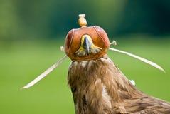 орел Стоковые Изображения