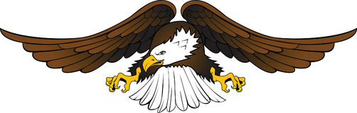 орел 2 Стоковые Фотографии RF